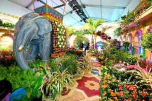 Everything About Macy's Flower Show in NYC 2021