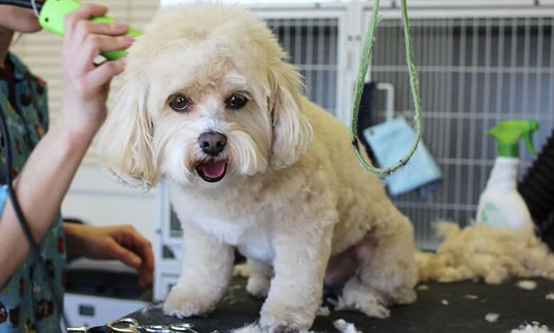 Best Dog Grooming Salons in New York City