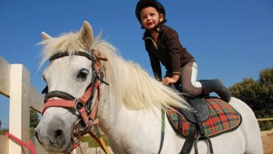 Photo of Best Horse Riding Schools in New York City